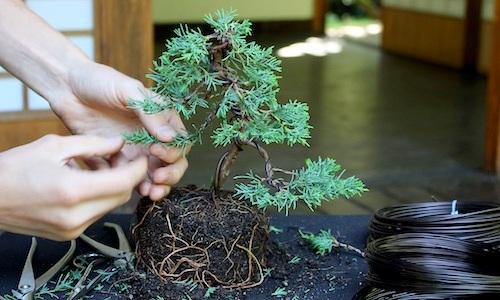 盆栽の作り方