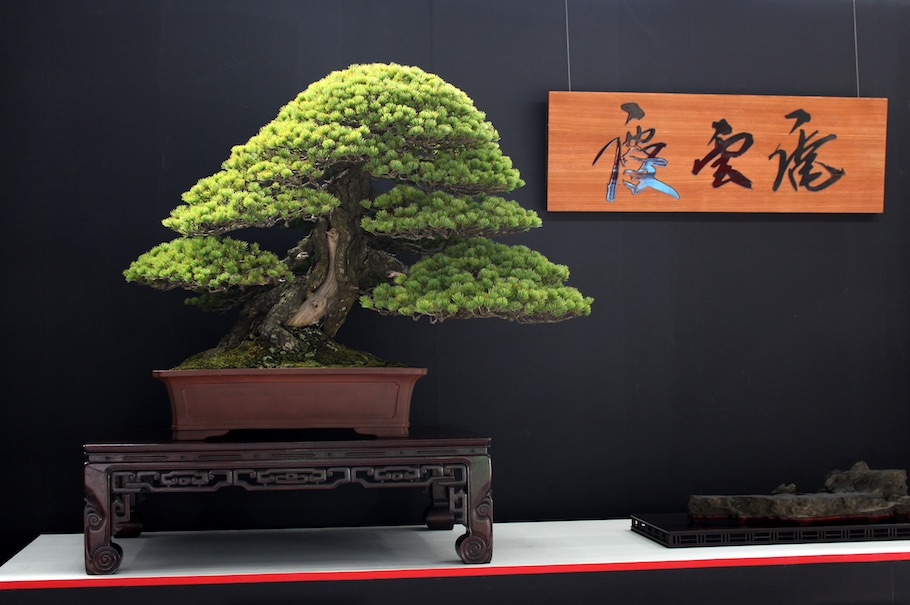 World Bonsai Convention Saitama, 2017