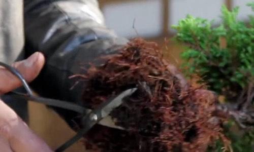 盆栽スターターキット