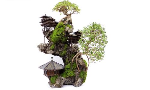 クリフ盆栽